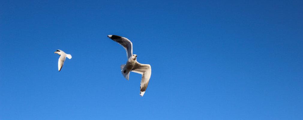 Ich flieg auf Usedom-kommst Du mit?